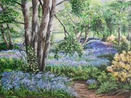 Savill Gardens Bluebells@ SOLD
